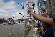 Tourists feeding the seagulls their McDonalds lunch on the Southbank, London, United Kingdom. The South Bank is a significant arts and entertainment district, and home to an endless list of activities for Londoners, visitors and tourists alike.