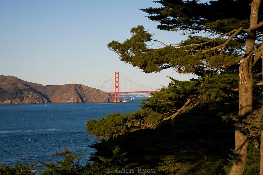 Cypress trees framing Golden Gate Bridge, Lands End, San Francisco, California