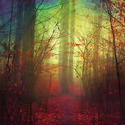 fantastic forest scenery<br /> Prints & more here:<br /> https://society6.com/product/the-way-in-variation_print#1=45