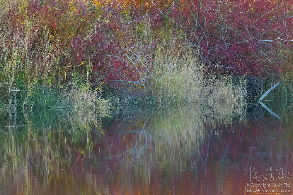 Grasses and autumn leaves reflect on the relatively still waters of Ebey Slough in Snohomish County, Washington.