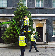 2015-12-06 Christmas tree goes in at Number Ten