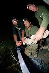 George & Piers Releasing Crocodile
