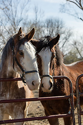 two horses on a ranch