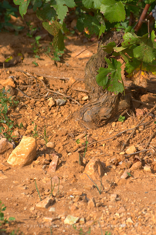 Soil detail. Stony. Sand. Calcareous. Pommard, Cote de Beaune, d'Or, Burgundy, France