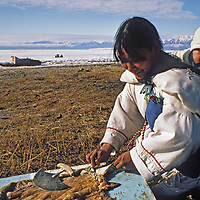 ARCTIC CANADA. Inuit mother prepares seal skin with Ulu knife, Pond Inlet, Baffin Island