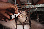 At the All India Institute of Medical Sciences, (A.I.I.M.S.) New Delhi, India.  Male contraceptive nasal spray tested on monkeys.