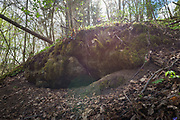 "Like recently exposed secrets calcareous rocky slope openings appear in broadleaved forest on slopes of river Ruņa, nature reserve ""Ruņupes ieleja"" (dabas liegums ""Ruņupes ieleja""), Kurzeme, Latvia Ⓒ Davis Ulands | davisulands.com"