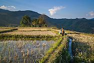 Young Laotian girl crosses fields carrying bags of vegetables, between Muang Kham and Phonsavan along Road 7, Xieng Khouang Province, Laos, Southeast Asia
