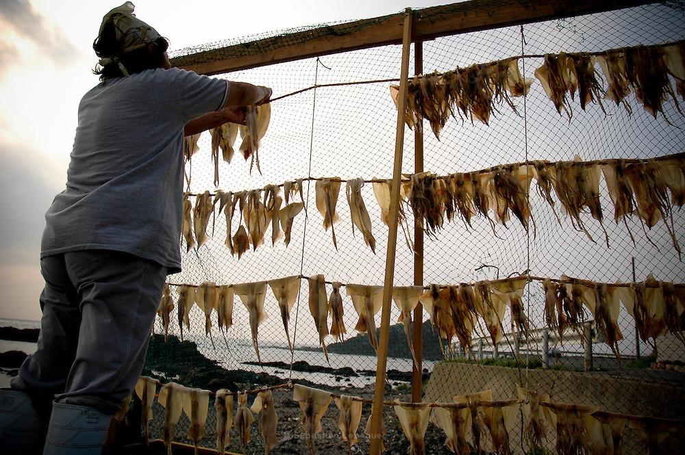 AOMORI KEN, JAPAN - Woman who dry some squids just after fishing - August 2005 ***[FR]***  Femme faisant sécher des calamars juste apres la peche.
