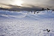 Snow Vista, Mount Wellington Forest Park - Tasmania