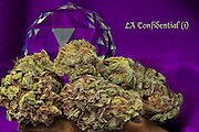 LA Confidential nug photo shot in a professional photography studio