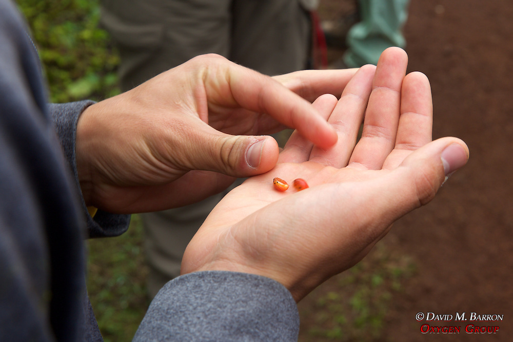 Checking Out Seeds From Plant, Santa Cruz Island