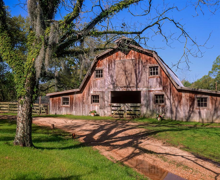 Gambrel barn & gravel drive, moss draped tree, St Francisville, LA