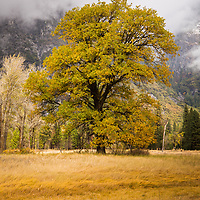 Beautiful fall colors on a cool morning in Yosemite Valley.