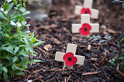 Remembrance crosses, a small wooden crosses decorated with a poppy, used to remember the sacrifice of members of the armed forces who have died in the line of duty, England, UK