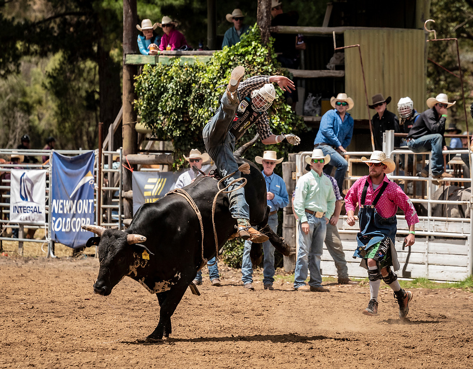 Competition at the Boddington Rodeo.