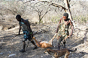 Hadza (or Hadzabe) Hunting party return to the village with a hunted antelope. Photographed at Lake Eyasi, Tanzania