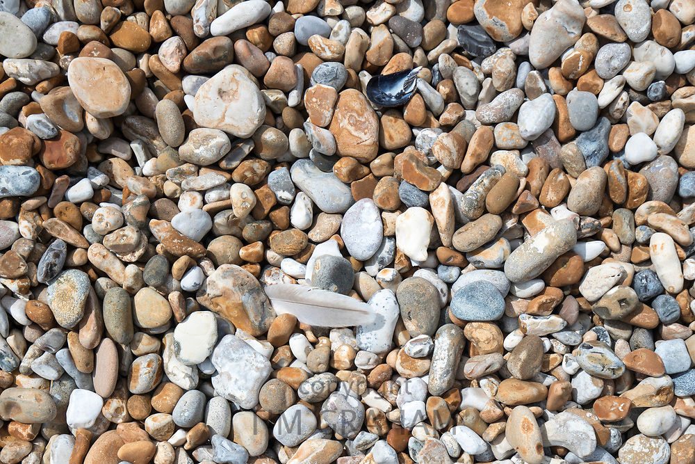 Shingle and seagull feather on the pebbly beach at Dungeness in Kent, UK