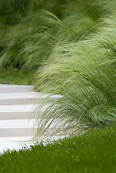 Stipa tenuissima planted along edge of white path