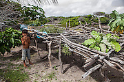 Julião Brito, 7, plays next to the small garden use to farm a few vegetables. The locals of Queimada dos Britos don't grow many plots of land since they are afraid of the accelerating advance of the dunes that have already covered several houses. No one really knows when the village was founded but the legend says that the founder Manuel Brito, when running away from home due to a drought that was scorching his homeland, he ended up settling down in the only non-sandy portion of the Lençois.