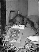 1954 - Miscellaneous