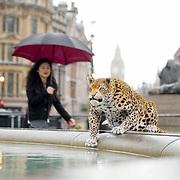 Leopard Loose in London,UK