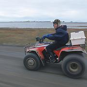 Nuk carries the precious cargo of Snowy Owl chicks on a four wheeler. Barrow, Alaska