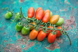 Tomato 'Santonio' F1 Hybrid - Solanum lycopersicum