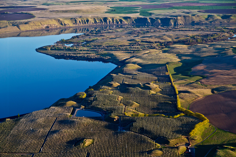 Orchards and agriculture activity along the Snake River just upstream from Tri-Cities Washington.  Licensing and Open Edition Prints.