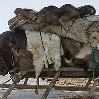 North of the Arctic Circle in Russia, a sled stacked with reindeer hides awaits harnessing to reindeer for ongoing migrations of the nomadic Komi clan.