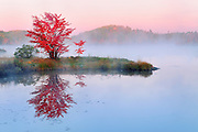 Reflection of red maple tree in St. Pothier Lake<br /> Worthington<br /> Ontario<br /> Canada