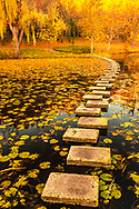 Concrete steps in a lake covered with aumn leaves