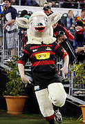"""Canterbury's mascot """"Larry the Lamb"""" makes his entrance into Jade Stadium during the Air New Zealand Cup week 4 Ranfurly Shield match between Canterbury and Southland on Friday August 18, 2006 at Jade Stadium in Christchurch, New Zealand. Canterbury won the game 24-7. Photo: Jim Helsel/Photosport"""