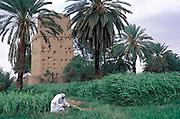 A farmer checking his crops at Najran oasis