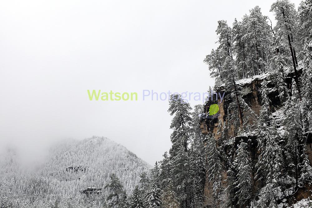 Black Hills Eaten by Winter