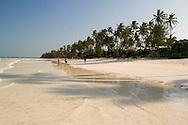 Palm trees lining Kiwendwa Beach.  Zanzibar, Tanzania