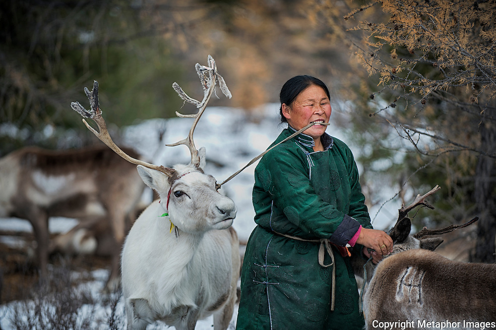 The Dukha people are reindeer nomads. For thousands of years they have lived in the remote sub arctic landscape in northern Mongolia, known as the Taiga. They were here long before Gengis Khan united hostile nomadic tribes into an army which conquered history's largest imperium in the year 1100 . What makes them unique is that they are the only reindeer herding community who do not eat their own animals. The world has been standing still in these mountains, until now. The modern and urbane world has reached the Dukha people and it threatens them.<br /> <br /> At the same time the forests are getting smaller, commercial hunting has increased for the animals they eat and have shared with the wolves. The competition for deer, boar, moose and other wild species has changed the world of the Dukha. The consequences have been dramatic. There are just 44 families left in the barren landscape, and for the first time for thousands of years they have been forced to eat their own reindeer- their one and only source of income. The wolf is just as desperate. What used to be a harmonious coexistance, has become an intense fight for survival.The Dukha are, to varying degrees, facing threats to their cultural survival – the threat of transitions to market-based economies, tourism, global warming, language loss and assimilation into the dominant majority are changing their lives irrevocably.