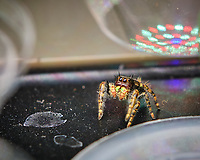 Spider. Image taken with a Fuji X-T3 camera and 80 mm f/2.8 macro lens (ISO 200, 80 mm, f/5.6, 1/60 sec)