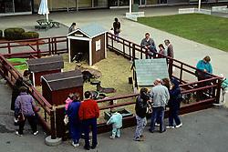 Farm Animals At Mall