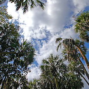 Florida Scenic images for the promotion of Florida tourism in the Sunshine State.