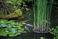 Koi Pond at Taizoin - Koi ponds are used as part of a landscape garden with Nishikigoi   ornamental carps. It is said that the design of the koi pond has an effect on the well-being of the carp. Various sophisticated methods are used to protect the carp from predators.