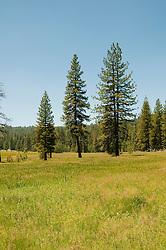 Princess Meadow, Kings Canyon National Park, California, USA.  Photo copyright Lee Foster.  Photo # california121629