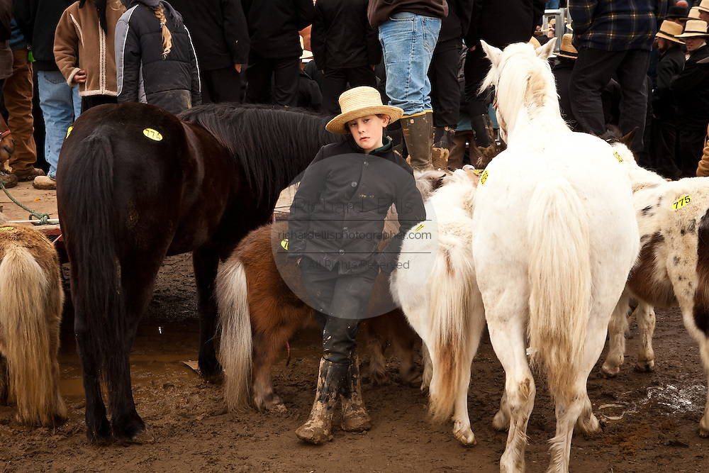 Amish boy with mini horses during the Annual Mud Sale to support the Fire Department  in Gordonville, PA.
