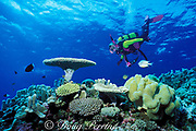 coral gardens,<br /> Flinders Reef, Coral Sea, <br /> Australia  MR 205<br /> <br /> diver and sea fan, MR 205<br /> Flinders Reef, Coral Sea, <br /> Australia