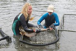 Stephanie & Kattie Putting Shovelnose Guitarfish Shark Into Pen