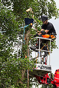 A tree surgeon working with the National Eviction Team pauses during the removal of an ancient alder tree as part of works for the HS2 high-speed rail link to contemplate a blue line from which environmental activists from HS2 Rebellion are suspended above the river Colne in an attempt to protect the tree on 24th July 2020 in Denham, United Kingdom. A large security operation involving officers from the Metropolitan Police, Thames Valley Police, City of London Police and Hampshire Police as well as the National Eviction Team ensured the removal of the tree by HS2 despite the protests by activists.