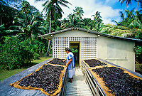 Drying vanilla beans, Huahine, French Polynesia
