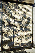 closed window shutter with tree shadow