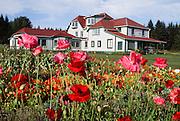 Alaska. Gustavus . Gustavus Inn.