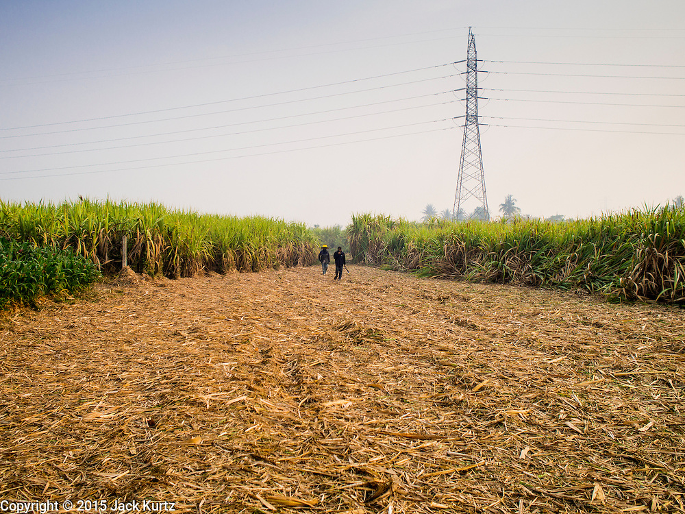 09 FEBRUARY 2015 - THA MAI, KANCHANABURI, THAILAND: Workers walk through sugarcane stubble after a mechanical harvester clear cut the field in Kanchanaburi, Thailand. Thailand is the world's second leading sugar exporter after Brazil. The 2015 sugarcane harvest in Thailand is expected to fall about 5% compared to the 2014 harvest because of a continuing drought in Southeast Asia. Brazilian production is also expected to fall this year because of ongoing drought in Brazil. Australia, the number 3 sugar exporter, is also expected to see a smaller harvest this year because of continuing draught in Australia.   PHOTO BY JACK KURTZ